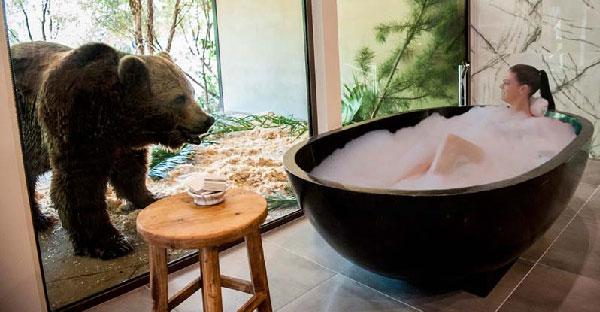 โรงแรมออสเตรเลียเปิดบริการแนวแปลก จะอาบน้ำดูหมีหรือจะกินข้าวกับสิงโตก็ได้