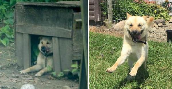 หมาน้อยถูกล่ามมาทั้งชีวิตดีใจสุดขีด หลังได้รับอิสระเป็นครั้งแรก