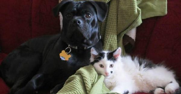ตูบแสนรู้นำทางมนุษย์ไปช่วยลูกแมวถูกทิ้ง ก่อนกลายเป็นคู่ซี้ดูแลกันไม่ห่าง