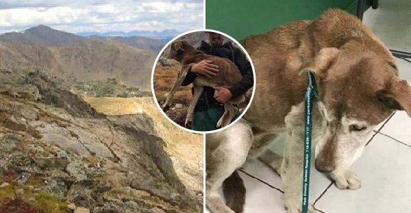 นักปีนเขาใช้เวลา 6 สัปดาห์ ในการตามเสียงของสุนัข ที่ร้องขอความช่วยเหลือจนเจอ