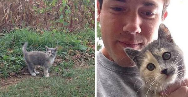 ลูกแมวจรหลงทางในไร่ข้าวโพด เดินบิดไปบิดมาจนมนุษย์ใจอ่อนยอมตกเป็นทาส