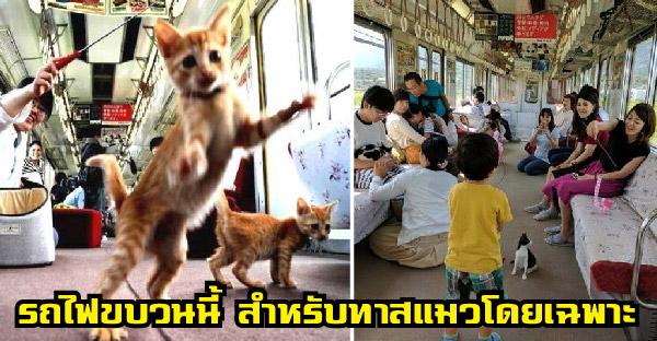 รถไฟสายพิเศษที่เปิดให้บริการพร้อมแมวเหมียว 30 ตัว ไว้เป็นเพื่อนเล่นตลอดการเดินทาง