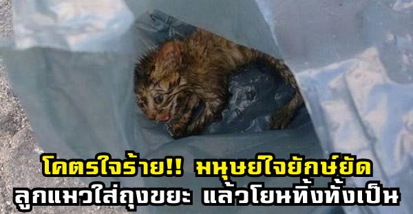 โคตรใจร้าย!! มนุษย์ใจยักษ์ยัดลูกแมวใส่ถุงขยะ แล้วโยนทิ้งทั้งเป็น