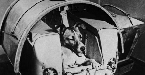 ไลก้า น้องหมาตัวแรกที่ถูกส่งไปนอกโลก และไม่มีวันได้กลับมา