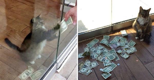 เหมียวมือฉกนั่งเก็บเงินหน้าประตูจากชาวบ้าน จนได้เงินไปบริจาคเพียบ