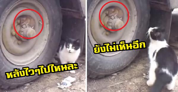 แมวเปิดศึกไล่ล่าแต่เจ้าหนูแอบซะเนียน จนเกือบเสียเหลี่ยมซะแล้ว!