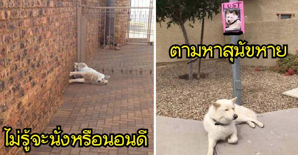 มัดรวมภาพสัตว์เลี้ยง ตลก ขำขัน คลายเครียด ที่เห็นแล้วอดหัวเราะไม่ได้จริงๆ