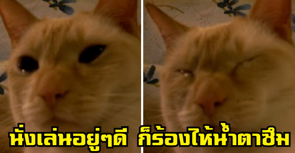 เจ้าของสงสัยว่าทำไมแมวของเธอจึงร้องไห้ จึงโพสต์ขอให้ชาวเน็ตช่วยหาคำตอบให้ที