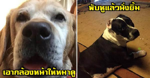 14 พฤติกรรมน่ารักๆของคนเลี้ยงหมา ที่คนไม่เคยเลี้ยงไม่มีทางเข้าใจ