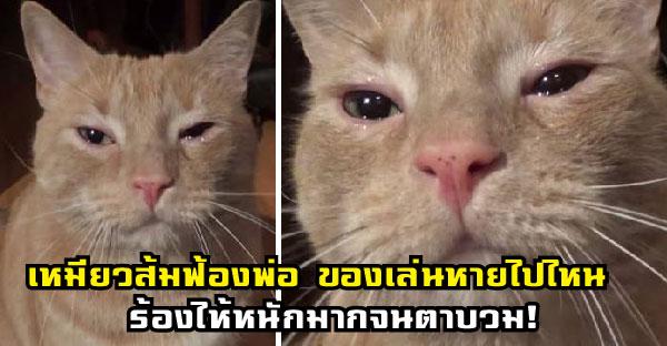เหมียวส้มฟ้องพ่อ ของเล่นหายไปไหน ร้องไห้หนักมากจนตาบวม