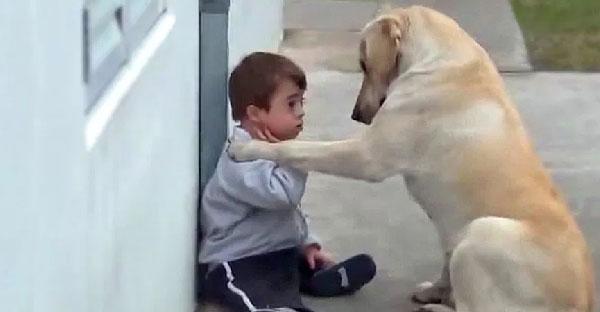 เกินบรรยาย! สุนัขปลอบโยนหนูน้อยดาวน์ซินโดรม ซึ้งจนต้องหลั่งน้ำตา!