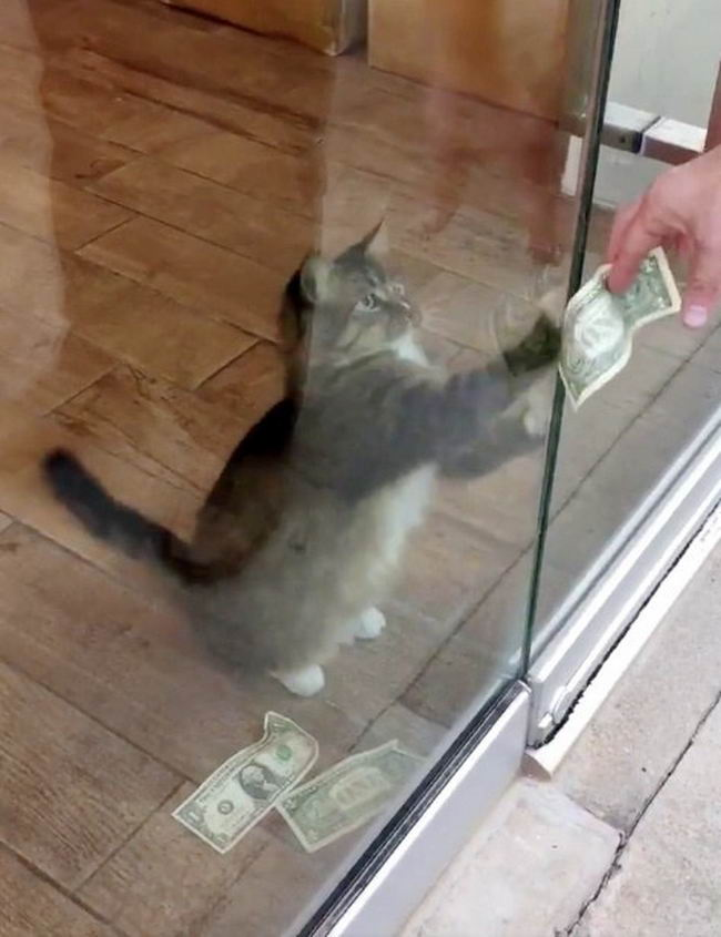 Картинки по запросу cashnip cat