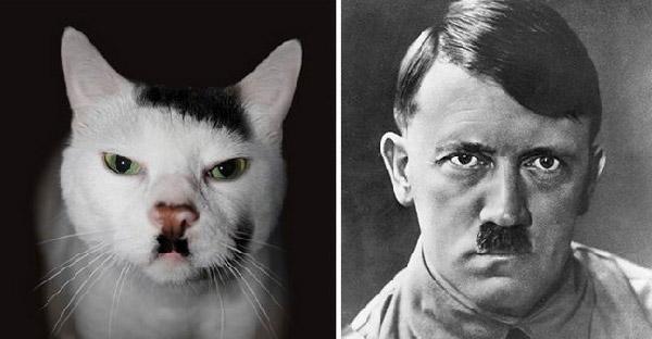 20 ภาพที่ยืนยันว่าแมวเป็นคู่เหมือน ทั้งสิ่งมีชีวิตและสิ่งของบนโลกใบนี้