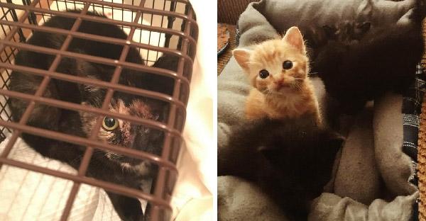 พลเมืองดีพบมิ้วน้อยถูกทิ้งข้างทาง และวางแผนจับแม่แมวไปอยู่ด้วยกันได้สำเร็จ