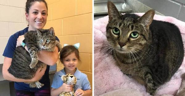 เจ้าของเลี้ยงแมวอ้วนไม่ไหว จึงส่งตัวไปศูนย์พักพิงสัตว์ และครอบครัวใหม่ก็ช่วยลดน้ำหนักให้