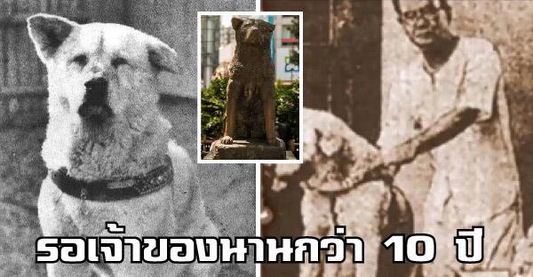 เผยชีวประวัติฮาจิโกะสุนัขยอดกตัญญู ผู้เฝ้ารอเจ้าของที่ล่วงลับกลับบ้านนานกว่า 10 ปี