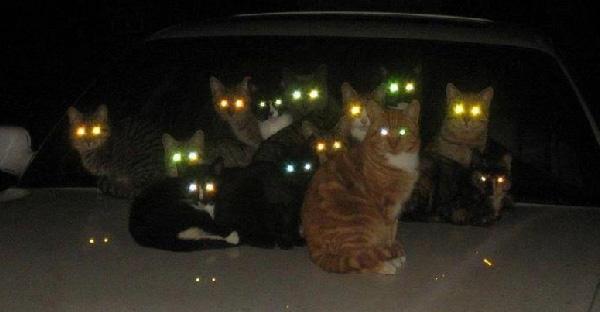 แมวในตอนกลางคืนแอบออกไปเที่ยวไหนบ้าง? ลองมาดูเส้นทางที่ได้จาก GPS กัน