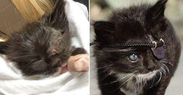 พลเมืองดีช่วยชีวิตแมวตาเสียจากข้างถนน พร้อมทำผ้าปิดตาสุดเท่และมอบการผจญภัยสุดยิ่งใหญ่ให้