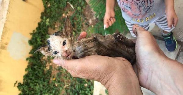 หญิงสาวได้ยินเสียงร้องแปลกๆ ตามเสียงไปพบลูกแมวเกาะขยะในท่อระบายน้ำเพื่อเอาชีวิตรอด