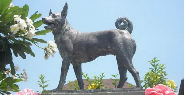 ประวัติคุณทองแดงสุนัขทรงเลี้ยงตัวที่ 17 ของรัชกาลที่ 9