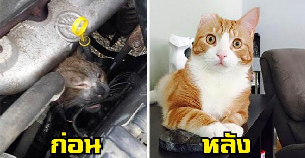 15 ภาพแมวก่อน-หลังได้รับการช่วยเหลือ ที่เปลี่ยนแปลงชีวิตจนดีขึ้นอย่างไม่น่าเชื่อ