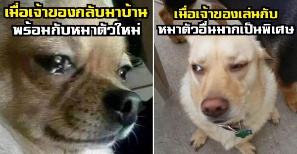 19 เรื่องขำๆของน้องหมาตัวดี ที่คนเลี้ยงหมาต้องเคยเจออย่างแน่นอน
