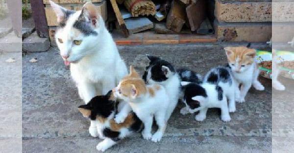 แม่แมวจรไม่ยอมแตะต้องอาหาร เพื่อให้ลูกๆได้กินจนอิ่มท้อง