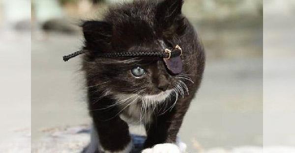 จากลูกแมวจรข้างถนนที่เกือบเอาชีวิตไม่รอด สู่การเป็นสลัดแมวตาเดียวสุดคูลล์