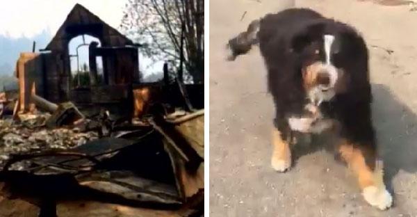 เจ้าของออกตามหาสุนัขที่หายไปในไฟป่า ปาฏิหาริย์ที่มันรอดชีวิตหวุดหวิด!!