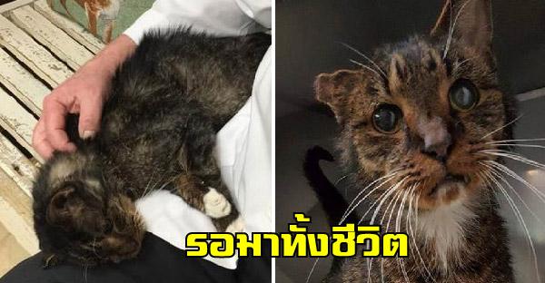 แมวจรเร่ร่อนข้างถนนนาน 15 ปี ก่อนจะพบคุณหมอใจดีช่วยรับเลี้ยง เป็นคนที่รอมาทั้งชีวิต