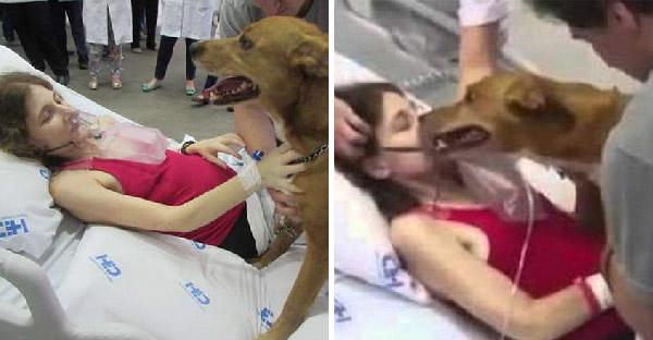 หญิงบราซิลป่วยมะเร็งขั้นสุดท้าย ปรารถนาขอพบหน้าสุนัขที่รักเป็นครั้งสุดท้าย