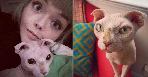 สฟริงซ์หูพับตัวนี้ช่วยเยียวยาจิตใจหญิงสาว ที่ถูกแฟนหนุ่มหักอกแถมหิ้วแมวหนีไปด้วย