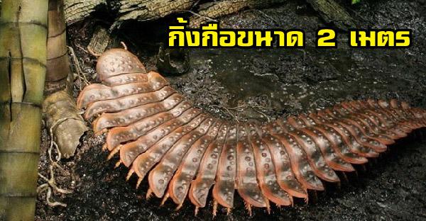 12 สัตว์ขนาดใหญ่ยักษ์ที่สูญพันธุ์ไปแล้ว เพราะโลกใบนี้อาจเล็กเกินไป