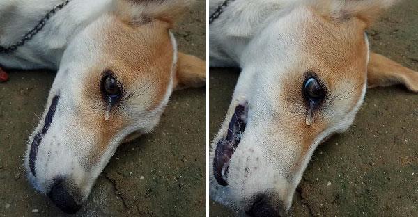 หมาน้อยไร้เดียงสานอนร้องไห้ก่อนสิ้นใจ หลังถูกโจรบุกบ้านวางยาเบื่ออย่างเลือดเย็น