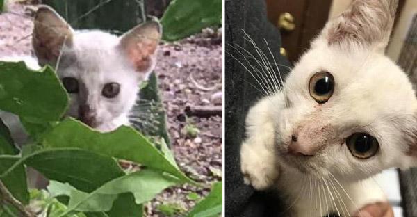 ลูกแมวจรจัดขี้อายหวาดระแวงพลเมืองดี แต่พอได้กอดที่อบอุ่น ก็เปลี่ยนแปลงทุกสิ่งทุกอย่าง