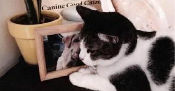 เมื่อพี่หมาที่เล่นด้วยทุกวันจากไป ทำให้นางนอนกอดภาพถ่ายเพื่อนรักด้วยความคิดถึงทุกวัน