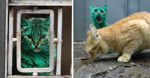 ชาวบ้านคิดว่าแมวถูกคนแกล้งย้อมสีเขียว แต่จริงๆเป็นความตั้งใจของเจ้าเหมียวเองต่างหาก