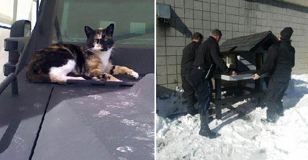 แมวจรจัดผู้ก่อกวนหน่วยสวาท จนได้บ้านหลังใหญ่เป็นเครื่องบรรณาการ