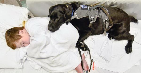 สุนัขเฝ้านายน้อยออทิสติกไม่ห่าง นอนกอดไม่ยอมปล่อยเพราะเป็นห่วงสุดหัวใจ