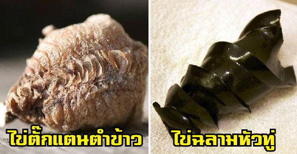 ฟองไข่สัตว์โลกของหาดูยาก ที่ทั้งชีวิตอาจไม่เคยเห็นเลยซักครั้ง