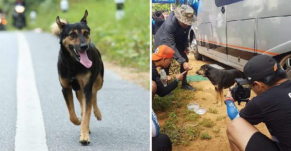 เรื่องเล่าจากทีมงาน หมาน้อยปริศนาวิ่งตาม พี่ตูนบอดี้สแลม ก้าวคนละก้าวเพื่อ 11 โรงพยาบาล