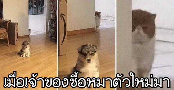 16 โมเม้นท์ฮาๆของแมวเหมียว ที่แอบซ่อนความร้ายกาจเอาไว้