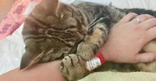 ลูกแมวถูกทิ้งในปั๊มน้ำมัน นอนกอดแขนคนช่วยไม่ยอมปล่อย เพราะกลัวจะถูกทิ้งอีกครั้ง