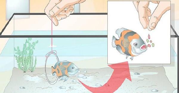 4 เทคนิคฝึกปลา!! เพิ่มสีสันให้กับการเลี้ยงปลาแบบเดิมๆ จนคุณต้องร้องว้าววว