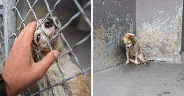 สุนัขแก่นั่งคอตกอยู่มุมห้องในศูนย์พักพิงสัตว์ รอคนซักคนมารับเลี้ยงไปดูแล