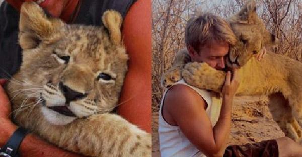 ชายหนุ่มช่วยชีวิตสิงโตตั้งแต่ยังแบเบาะ จนมันนับถือเขาเหมือนเป็นพ่อแท้ๆ