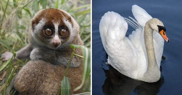 10 สัตว์โลกที่ดูเหมือนน่ารัก แต่แฝงอันตรายไว้มากมาย