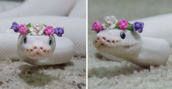 ถ้าคุณคิดว่างูน่ากลัว ลองชมภาพชุดนี้ที่จะเปลี่ยนความคิดของคุณกัน