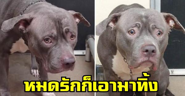 หมาน้อยถูกเจ้าของทิ้งอย่างไร้เยื่อใย ทั้งเหงาและหวาดกลัวในศูนย์พักพิงสัตว์ลำพัง