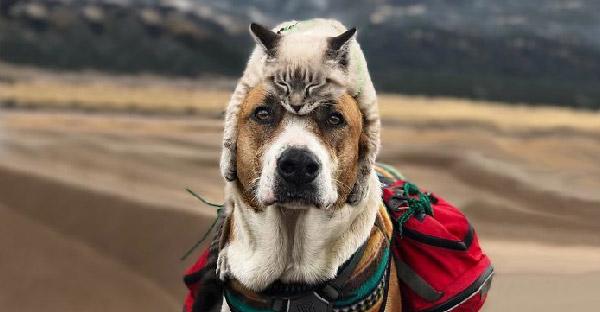 เมื่อพี่หมาจรจัดพบรักกับแมวไร้บ้าน ออกท่องเที่ยวด้วยกัน จนกลายเป็นคู่หู คู่ฮา คู่ใหม่